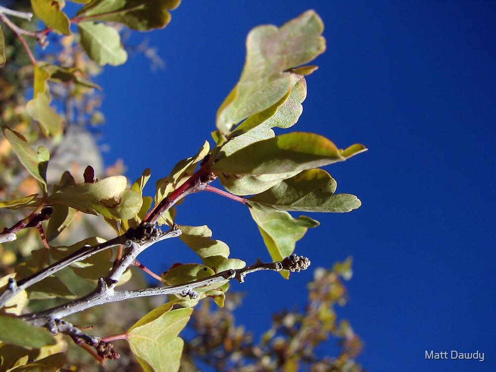 Reaching Branch by Matt Dawdy