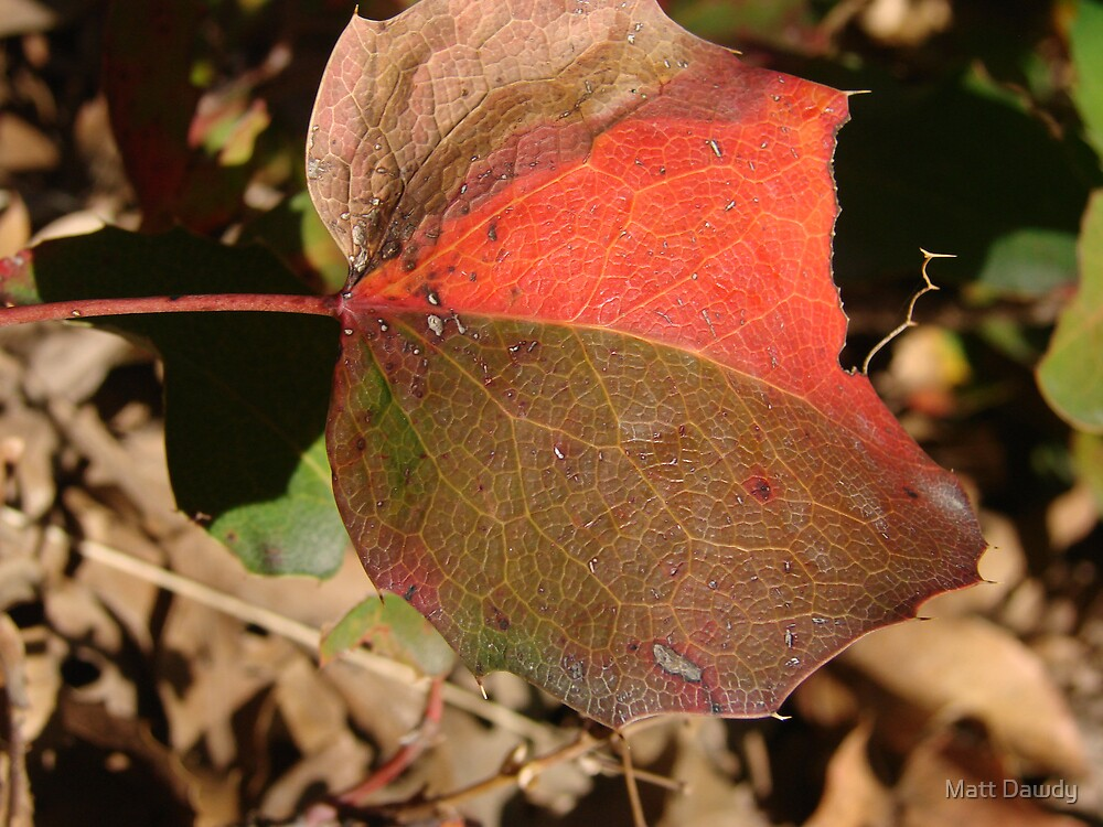 Patch Leaf by Matt Dawdy