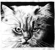 Cat stipple by Correlation