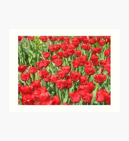 multitude of tulips Art Print