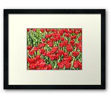multitude of tulips Framed Print