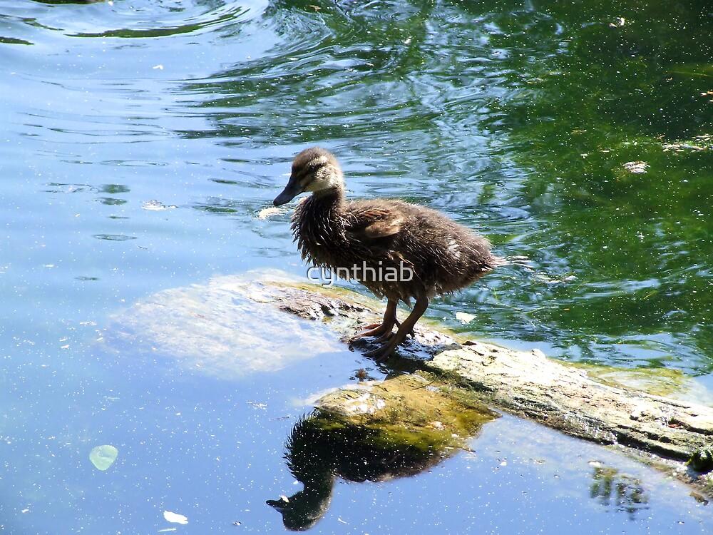 a teenage duck by cynthiab