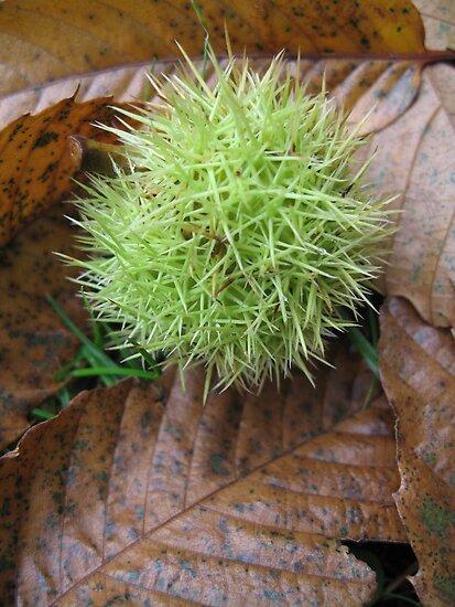 Sweet Chestnut by Sara Wiggins