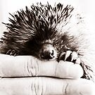 hedgie by ladytwiglet