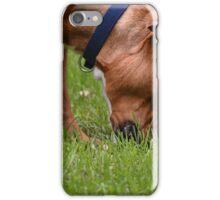 A Grazing Doggie iPhone Case/Skin