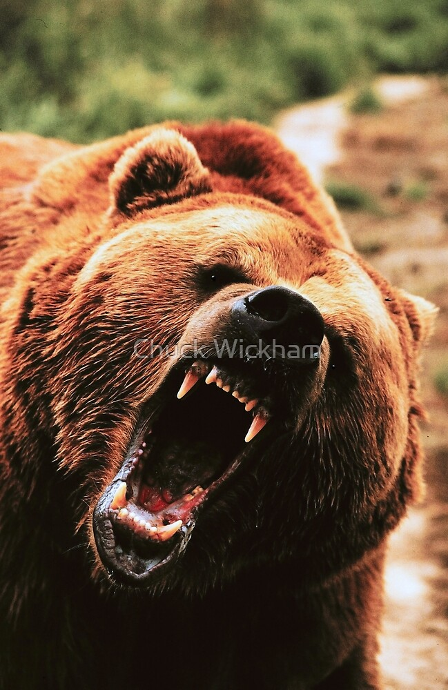 GRIZZLY BEAR by Chuck Wickham