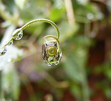 Droplets by poppykitten