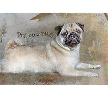 Pug on a Mug #1 Photographic Print