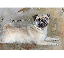 Pug on a Mug #1 Photographic Print