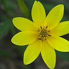 simply yellow by budrfli