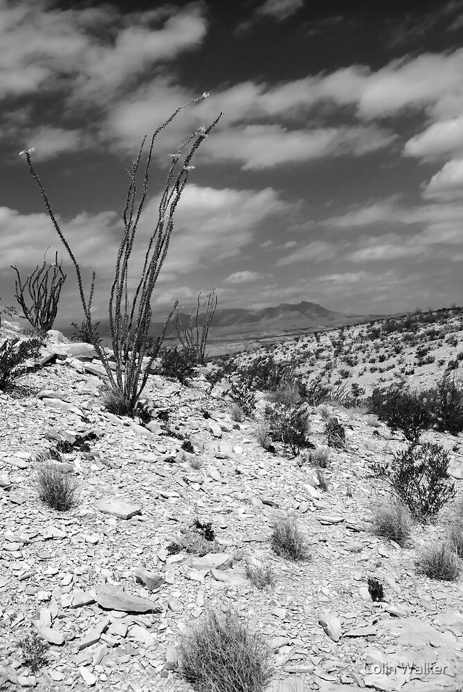 Desert  by Colin Walker