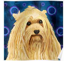 Digitally Painted Blond Hairy Yorkshire on Blue Poster