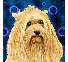 Digitally Painted Blond Hairy Yorkshire on Blue Photographic Print