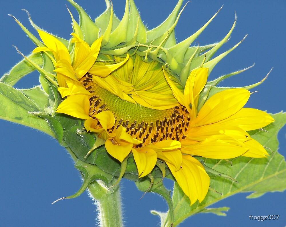 Sunflower by froggz007