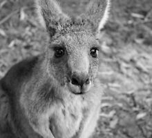 Those Eyes - Halls Gap (BW) by Andrew Dodds