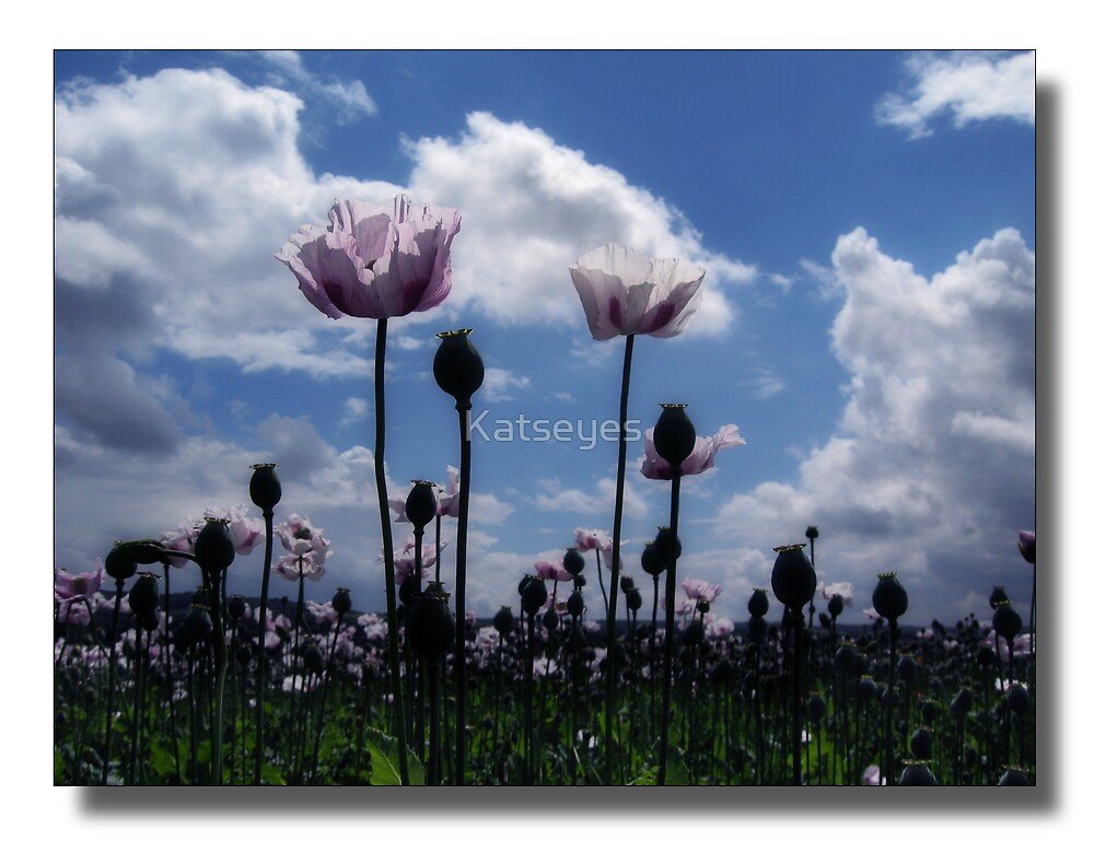 PURPLE POPPIES by Katseyes
