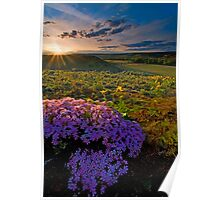 Last Light of Spring Poster