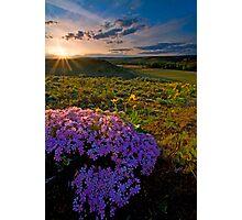 Last Light of Spring Photographic Print