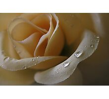 Cloth Rose Photographic Print