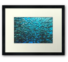 Splitted School of Jacks Framed Print