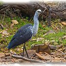 Pacific Heron by Bette Devine