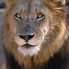 The Lion King! by jozi1