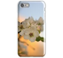 Pear Tree Flowers against Sunset iPhone Case/Skin