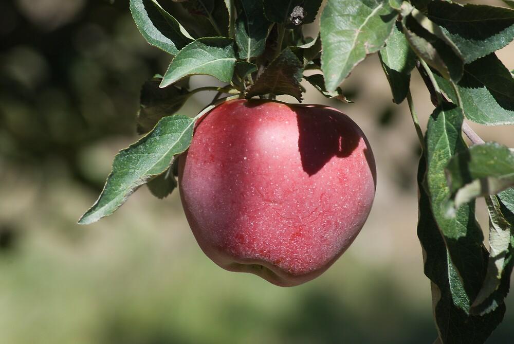 Apple by bluerabbit