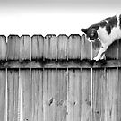 Scat Cat! by BethBernier