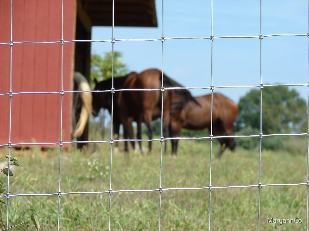 Horses by MaryannCo