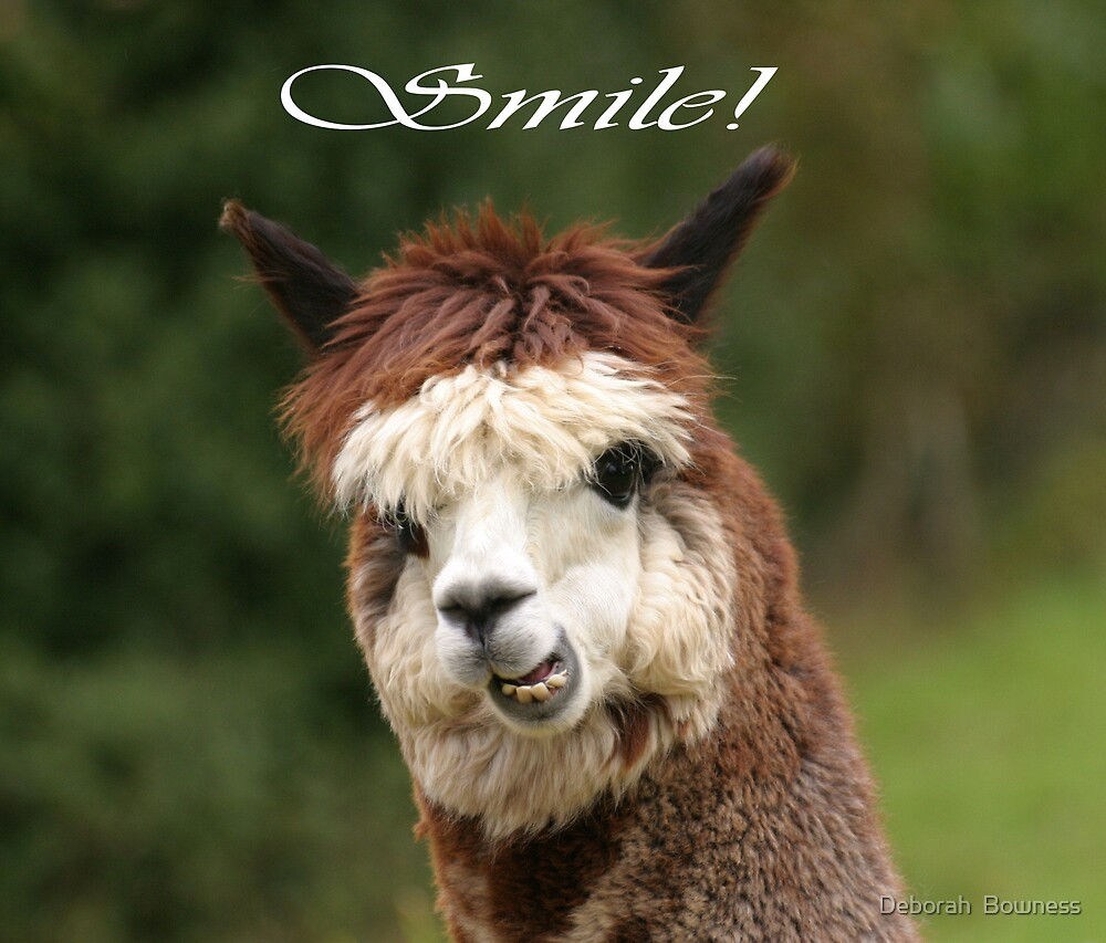 Smile! by Deborah  Bowness