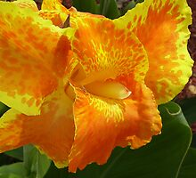 Canna Lilly by 1FANCY1