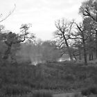 Pond at Dunham Massey.. by NaturesTouch