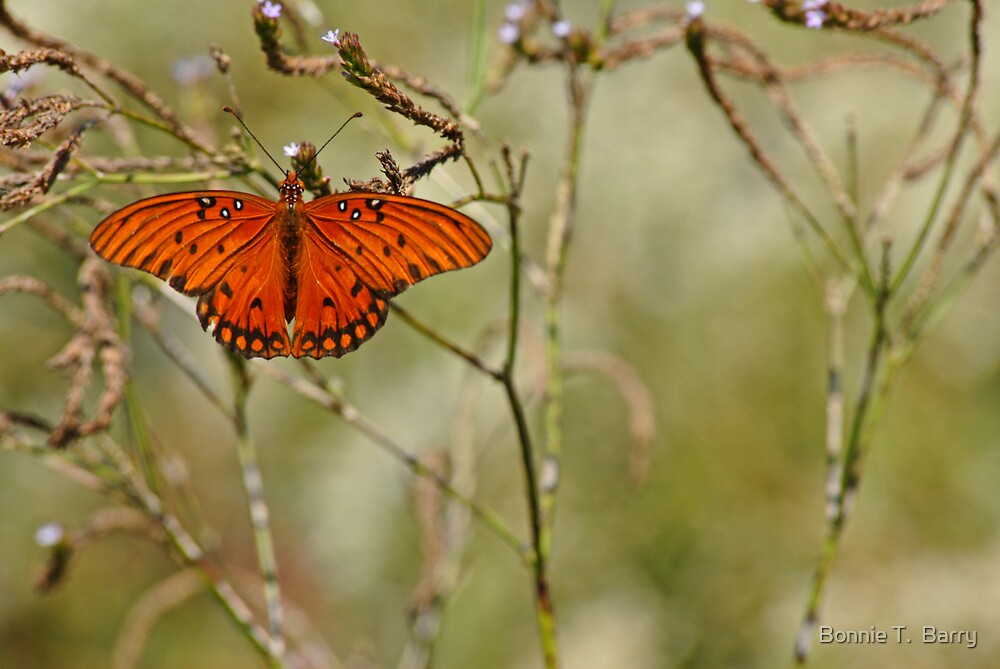 Autumn Butterfly by Bonnie T.  Barry