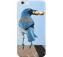 Beautiful Blue Jay with Peanut iPhone Case/Skin