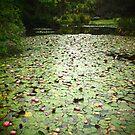 nymphaea lake by kchamula