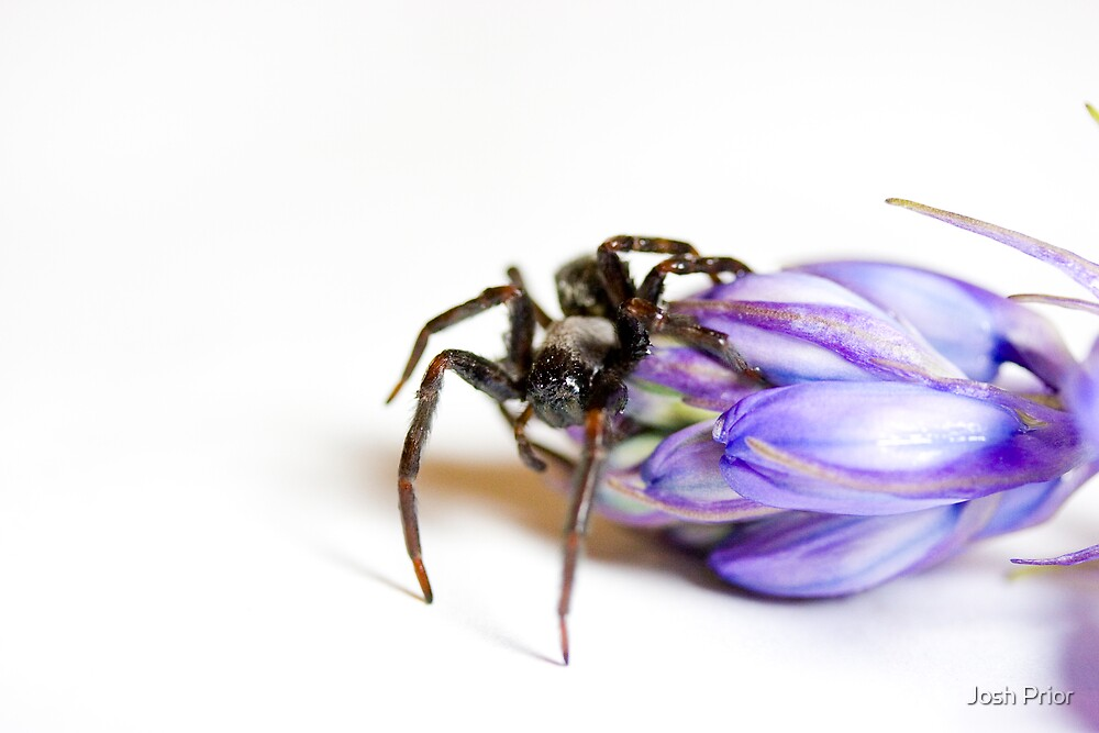 Dare To Smell This Flower by Josh Prior