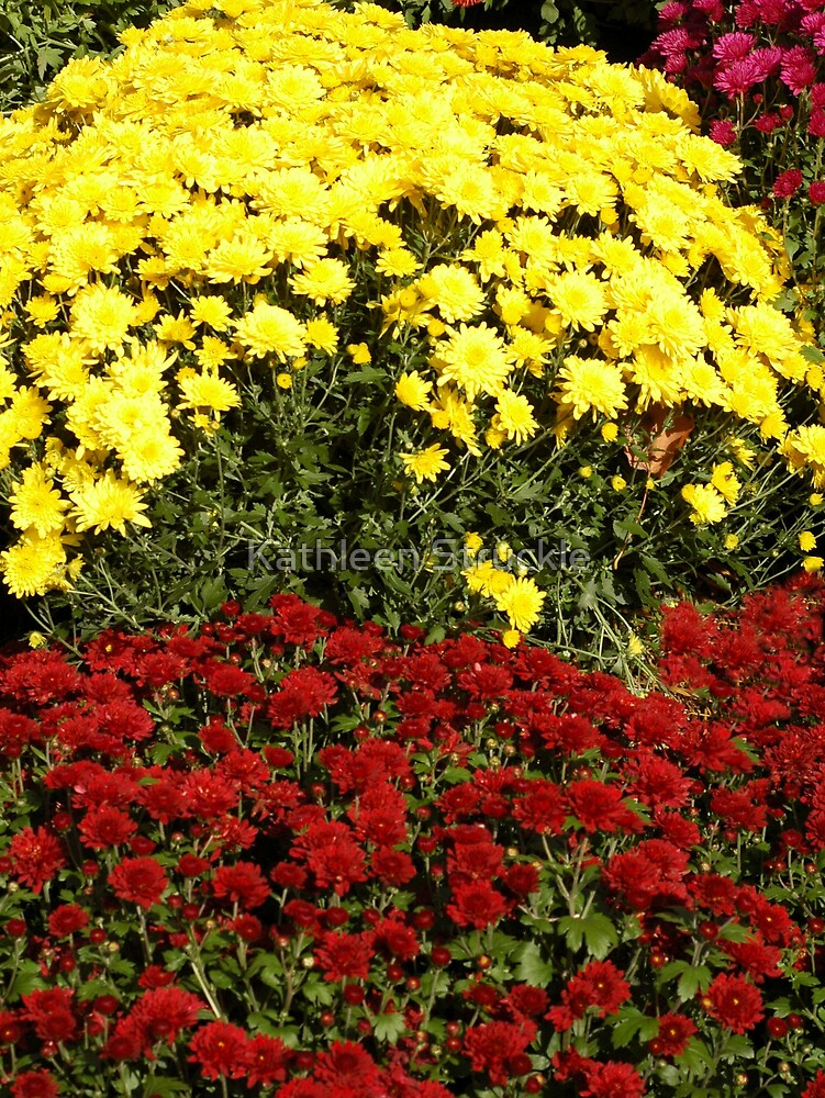Yellow And Rust Mums by Kathleen Struckle