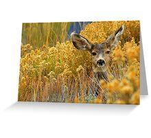 Colorado Deer Greeting Card