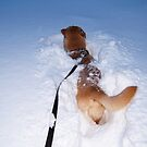 Snow bath by Christopher Barker