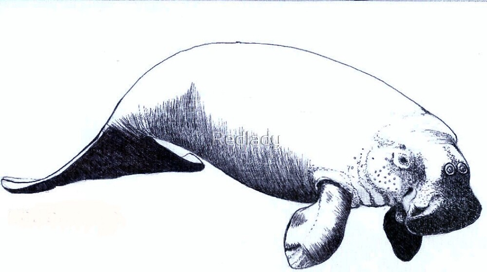 THE DUGONG by Redlady