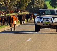 Cattle drive on the Henry Lawson Way by Darren Stones