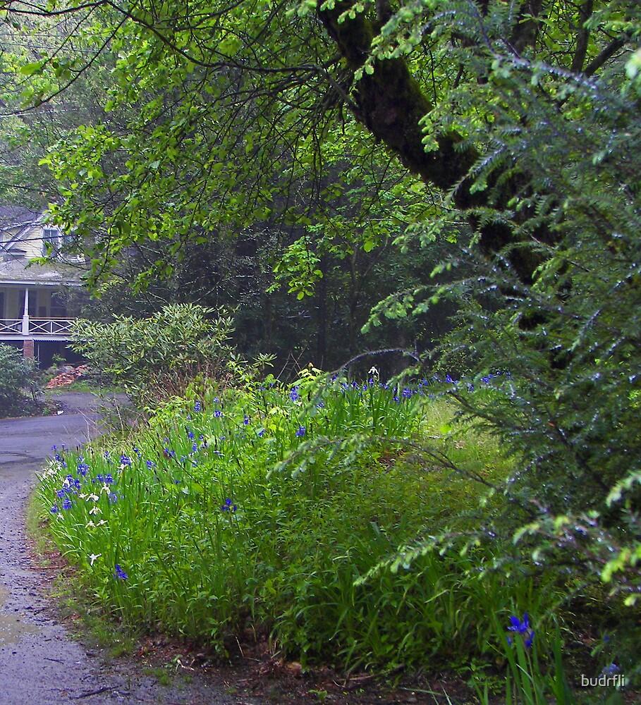 Rainy day by budrfli