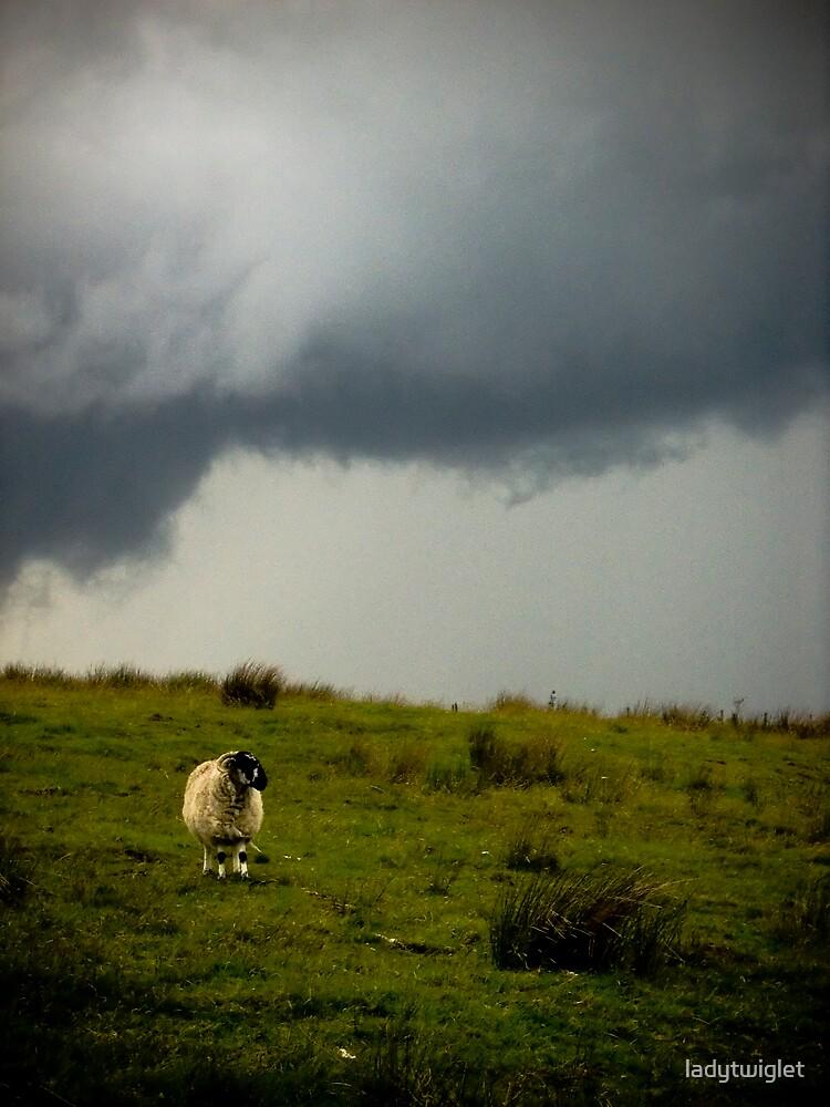 the moor by ladytwiglet