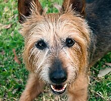 The Happy Terrier by Tiffany Dryburgh