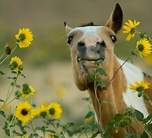 Sunflower Thief! by Kent Keller