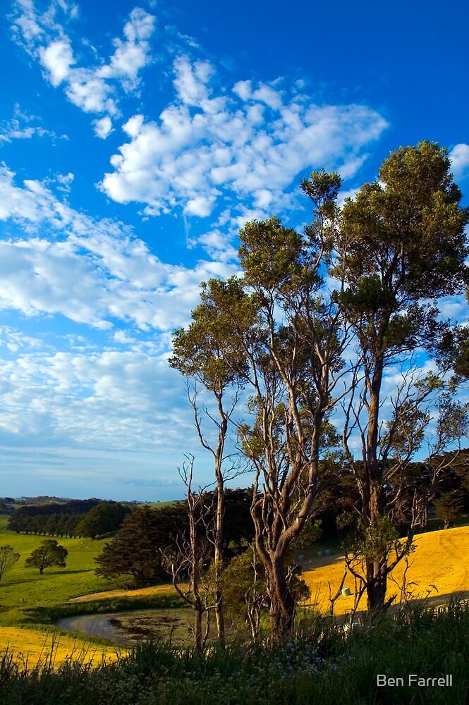 Tree Sky by Ben Farrell