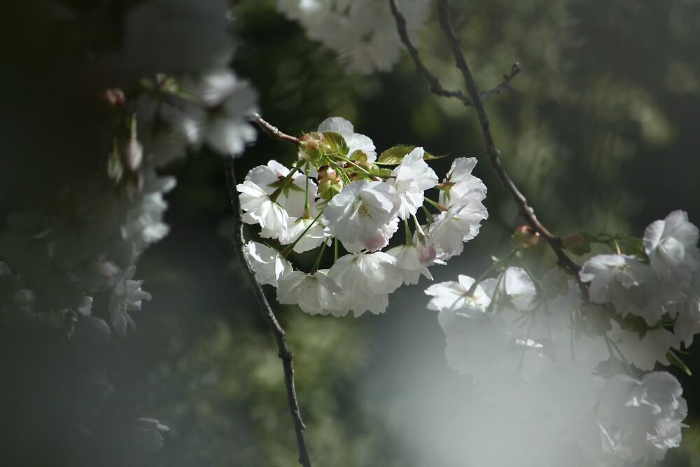 Spring break by JoTaylor