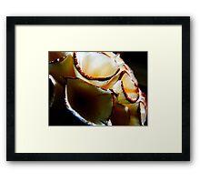 White ball of cones Framed Print
