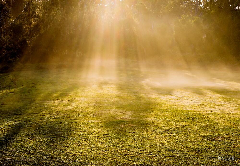 Morning Light by Bobbie